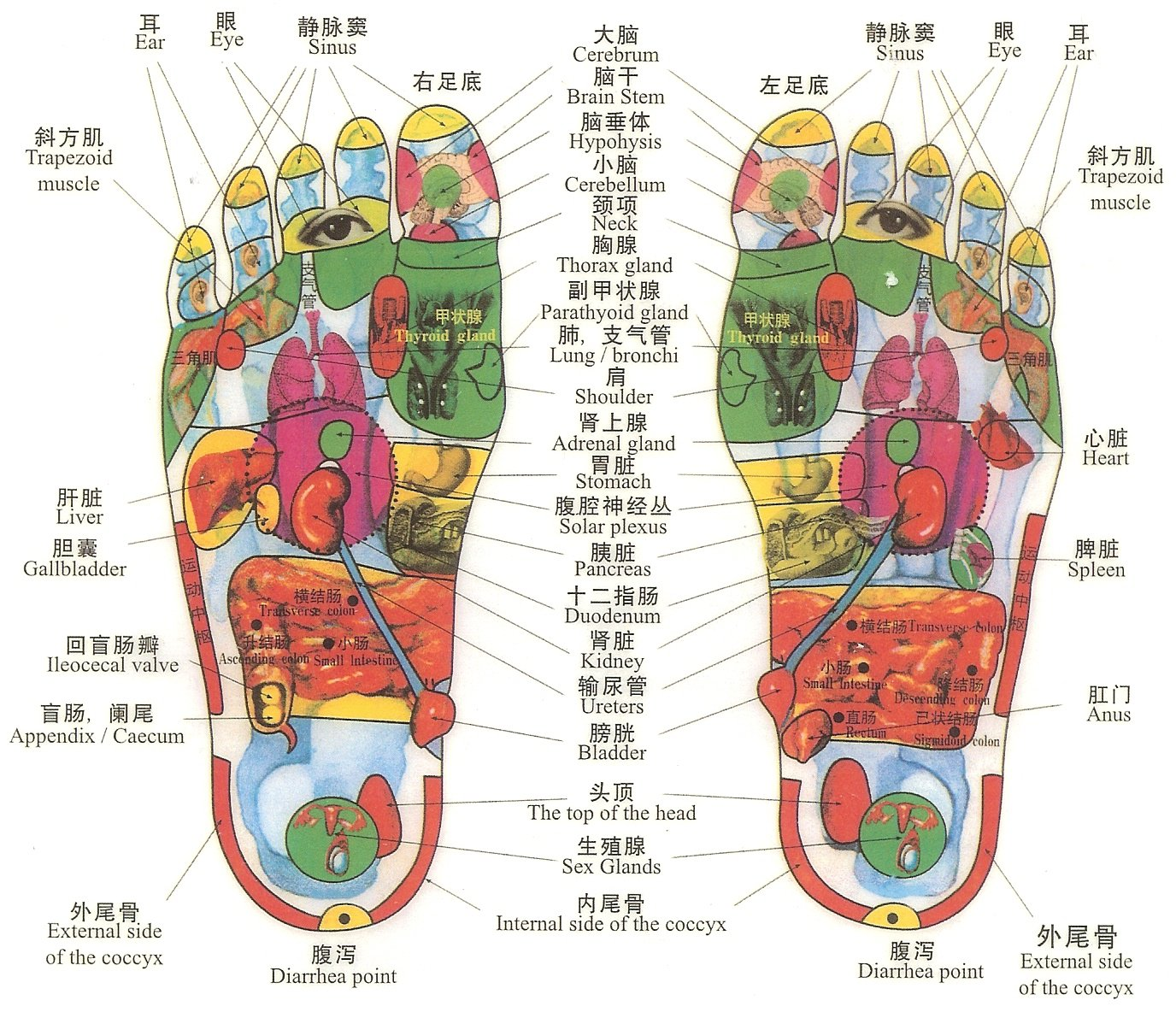 Tcm Diagnosis  Foot Reflexology, Dec 9th • Oriental. Best Internet Providers Chicago. Humira And Methotrexate Track Freight Shipment. Singapore Air Credit Card Vw Lupo Gti Tuning. Collaborative Tools For Business. How Long Can You Take Nexium. Anger Management For Parents. Genesis Rehabilitation Locations. Administrator Training Courses
